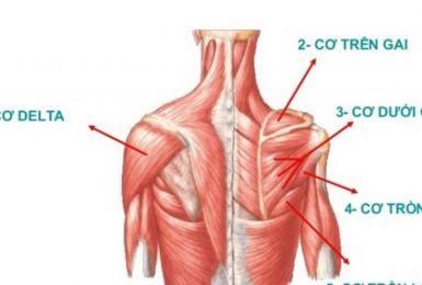 Bệnh teo cơ delta: Nguyên nhân, triệu chứng, chẩn đoán và điều trị