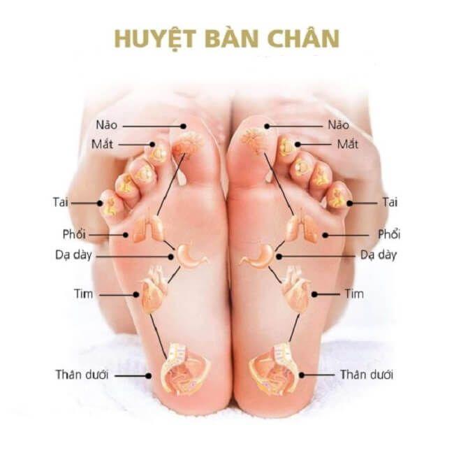 Sơ đô huyệt bàn chân